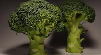 Брокколи, брюссельская и капуста цветная: выращивание и уход