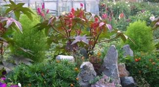 Как красиво рассадить в огороде цветы