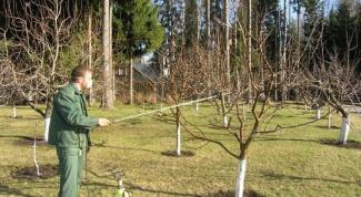 Какие работы нужно проводить в саду весной
