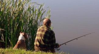 Как сделать ловушку для ловли рыбы своими руками