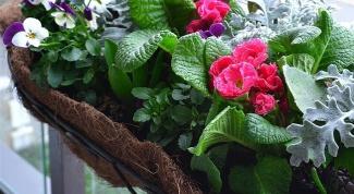 Ящики для цветов на балкон: яркое украшение фасада