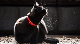 Зачем коты вываливаются в пыли