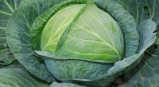 Than to fertilize cabbage