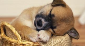 Можно ли травить блох двухмесячному щенку