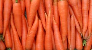 Какой сорт моркови лучше покупать для длительного хранения