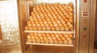 What temperature and humidity for hatching in an incubator