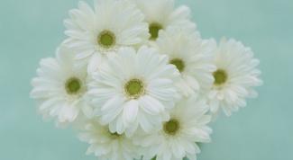 Букет из хризантем: кому принято дарить