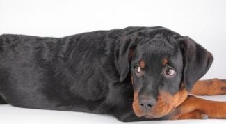 Какой запах отпугивает собак