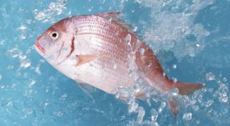Как плавают рыбы