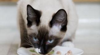 Чем можно кормить старого кота