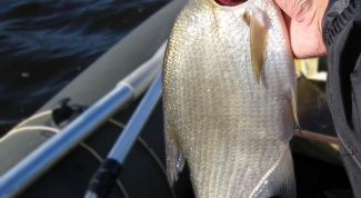 Как приготовить самому подкормку для рыбалки на леща