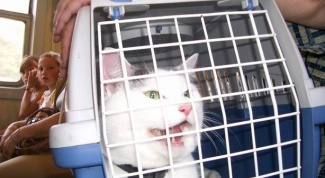 Как перевезти кошку на дальнее расстояние
