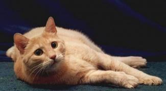 Why cats shitting at home