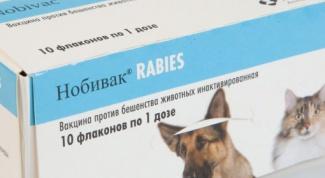 Вакцина «Нобивак» для собак и кошек: отзывы