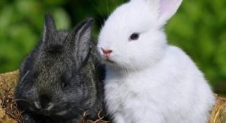 Какую траву нельзя давать кроликам и почему