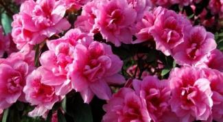 Какой самый капризный и привередливый цветок