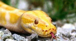 Чем компенсируется у змей слабое развитие зрения и слуха