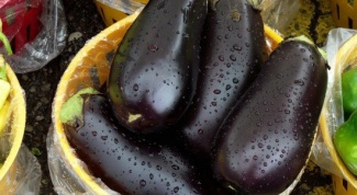 Care for eggplants in a greenhouse: tips gardeners