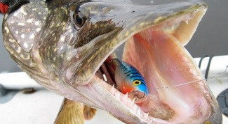 Рыбалка на спиннинг: попперы на щуку