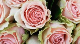Почему розы в вазе быстро вянут