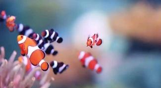 Как содержать аквариумных рыбок: совместимость