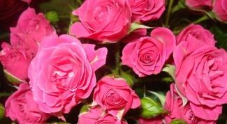 Какие цветы больше всего любят женщины