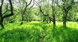 Как восстановить урожайность в запущенном саду