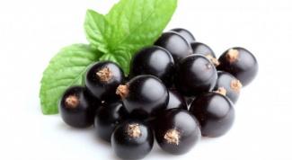 Как использовать черную смородину для здоровья и красоты