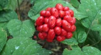 Травы, которые помогают бороться с диабетом
