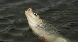 Как  на рыбалке сохранить рыбу свежей