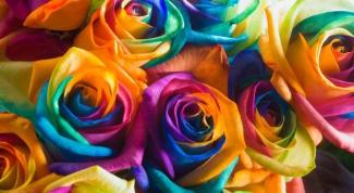 Можно ли вырастить розу из семени