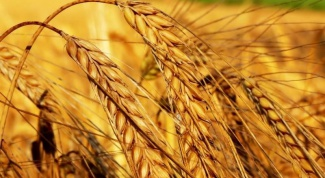 What is the difference between hard wheat from soft