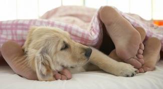 Как отучить собаку спать в одной постели с человеком