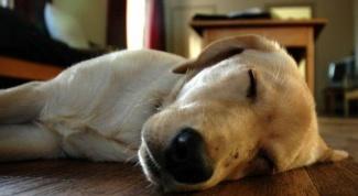 Как приучить собаку спать ночью