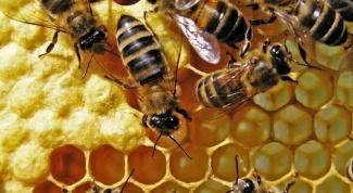 Что такое белый мед
