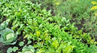 Что сажать в огороде