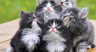 Почему кошка бросает котят