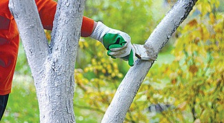 Как использовать железный купорос в садоводстве