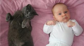 Какое животное можно держать в доме, если есть младенец