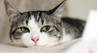 Что делать, если кошке попала вода в ухо