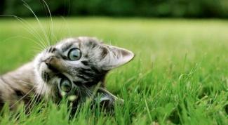 Почему кошка ест землю
