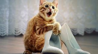 Что делать, если кот гадит в туфли