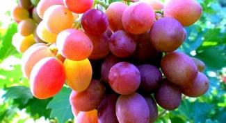 Как поливать виноград