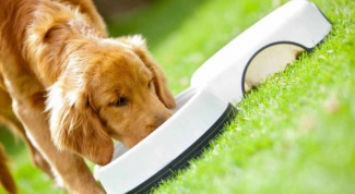 Как кормить собаку