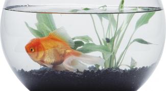 Сколько живут рыбки
