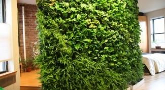 Как лучше сделать в квартире перегородку из растений