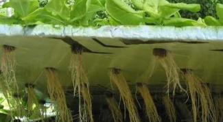 Могут ли размножаться растения в аквариуме без грунта