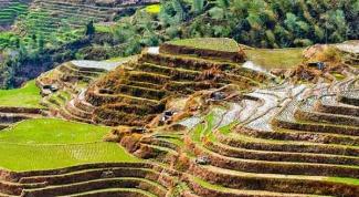Где самые большие рисовые плантации