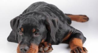 Почему собака отказывается от еды