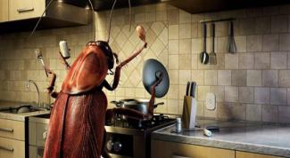 Защита от тараканов: народные средства от вредных насекомых